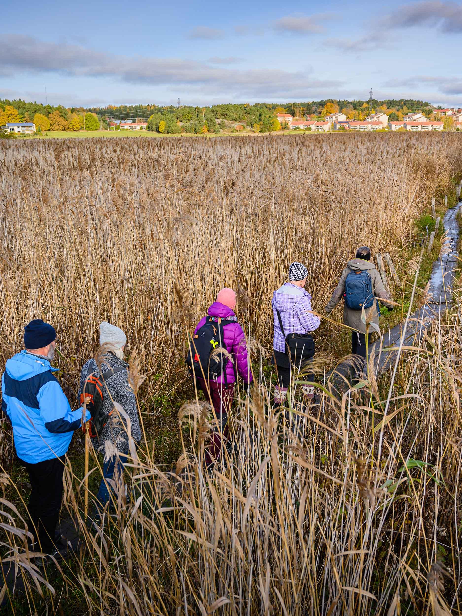 Pyhän Olavin merireitillä Turun Rauvolanlahden pitkospuupolulla on ollut vilskettä. Koronaepidemian aikana vaeltamisen ja retkeilyn suosio on huimasti kasvanut.